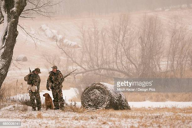 hunters waterfowl hunting near hay bales in winter - dead dog stock pictures, royalty-free photos & images