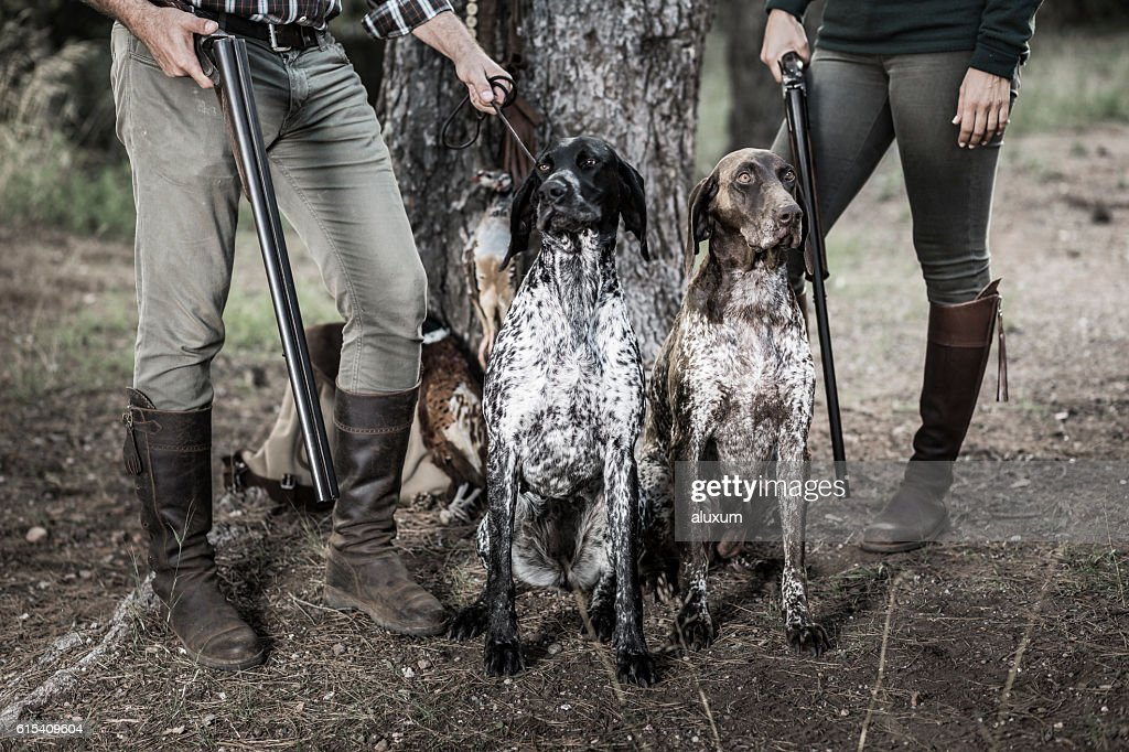 Hunters with purebreed dogs : Stock Photo