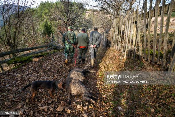 hunters with wild boar - hunting dog stock pictures, royalty-free photos & images