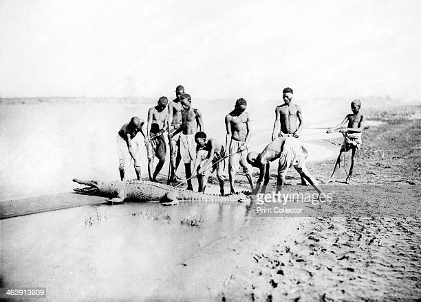Hunting a crocodile Nubia Egypt 1887 From the collection of the Bibliothèque Nationale de France