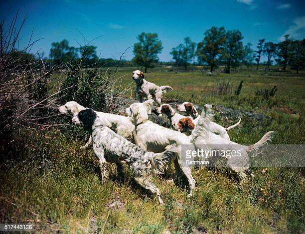 Hunting and hunting dogs