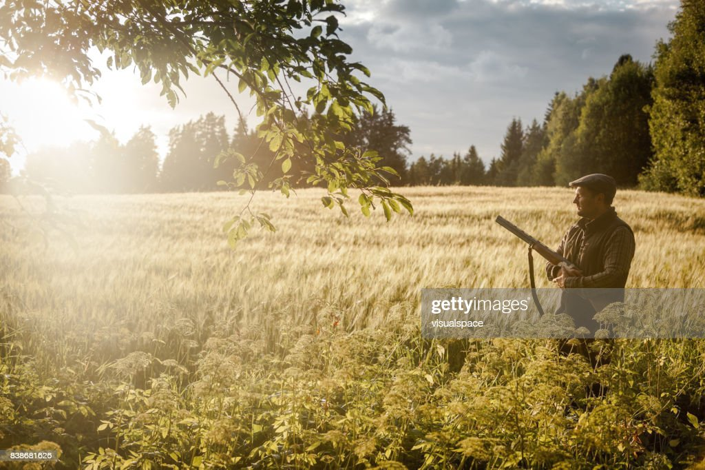 Hunting at golden hour : Stock Photo