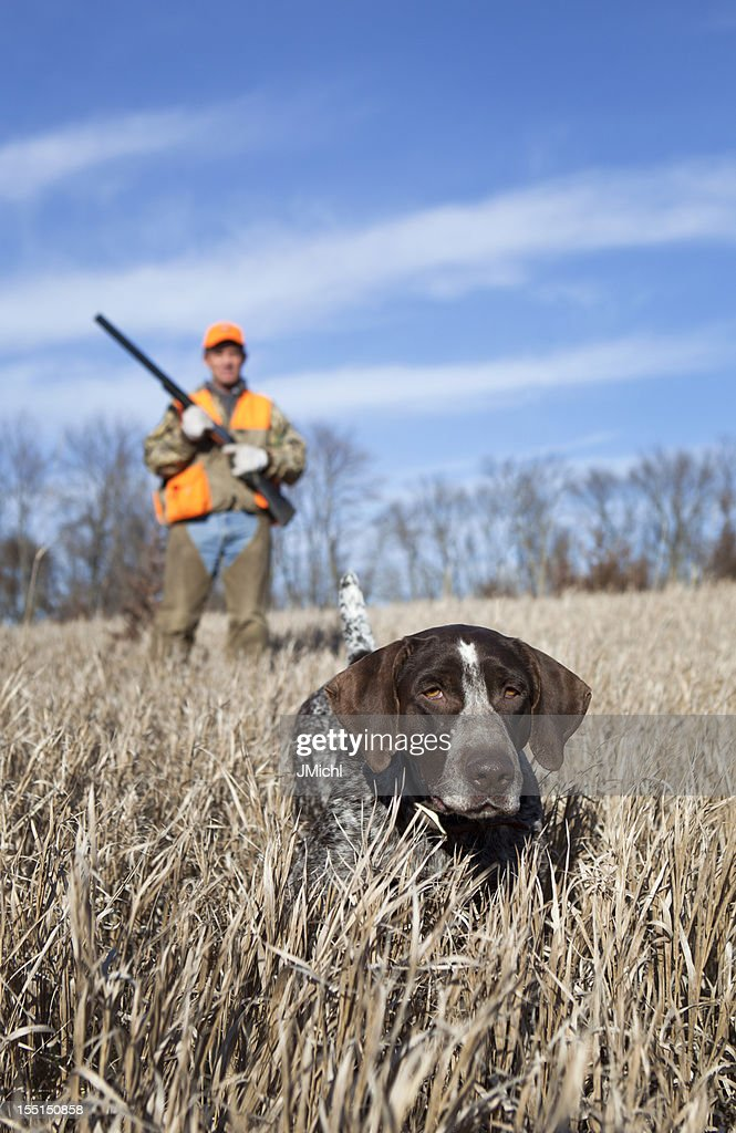 Hunting Dog and Man Upland Bird Hunting in Midwest Field. : Stock Photo