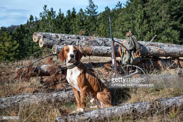 hunting dog - hunting dog stock pictures, royalty-free photos & images