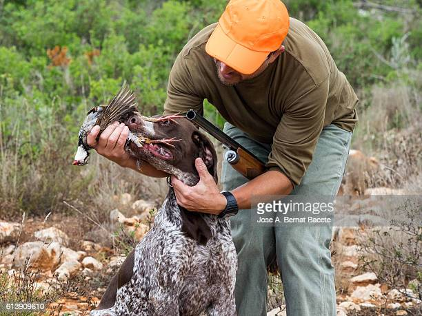 Hunting dog with a partridge in the mouth, giving himself the hunter.  (German Shorthaired Pointer)