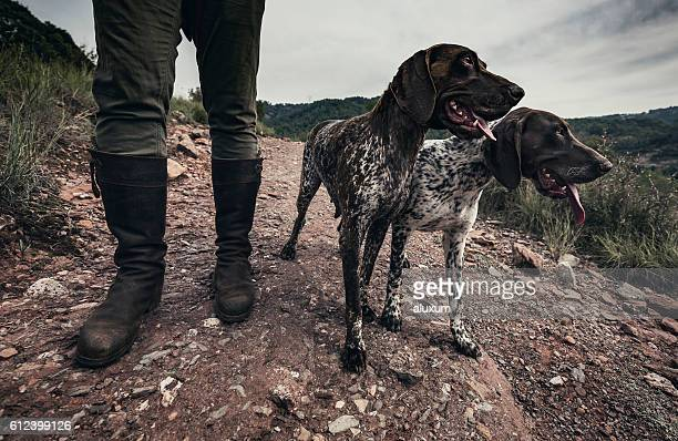 hunting dogs - german shorthaired pointer stock pictures, royalty-free photos & images