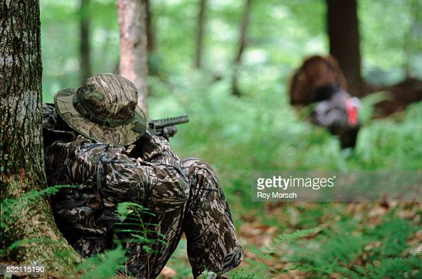 hunting for turkeys - turkey hunting stock photos and pictures