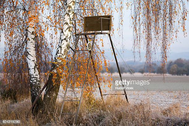 hunting high seat, autumn foliage, birch tree (betula) - czech hunters stock photos and pictures