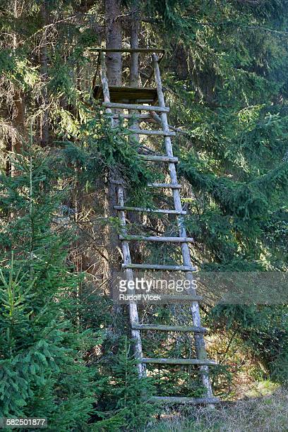 hunting high seat ladder, spruce forest - czech hunters stock pictures, royalty-free photos & images
