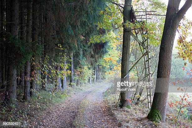 hunting high seat, rural road, autumn foliage - czech hunters stock pictures, royalty-free photos & images