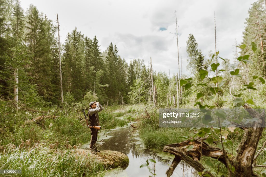 Hunting in the forest : Stock Photo