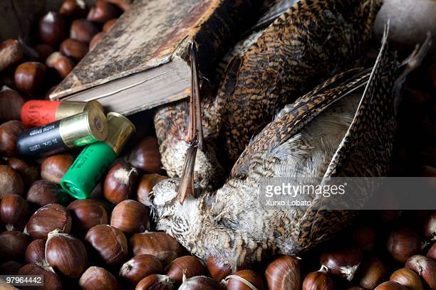 Hunting still life with ammunition bird book and chestnut 13th March 2009