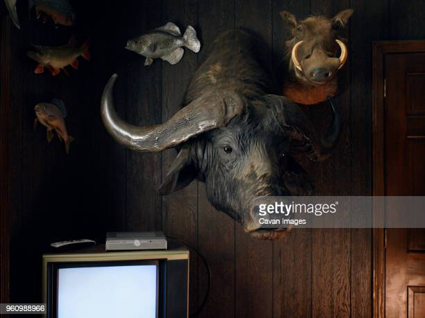 hunting trophies on wall - man cave stock photos and pictures