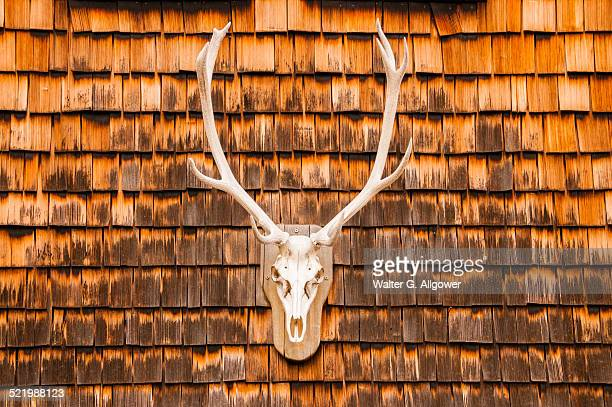 Hunting trophy at a clapboard wall, Berchtesgaden, Bavaria, Germany