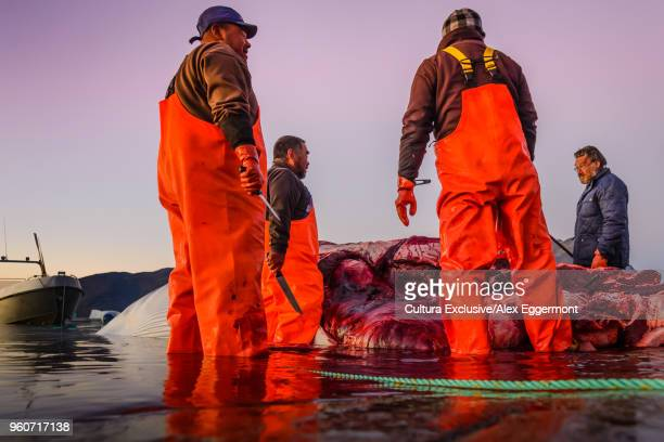 hunting whales, narsaq, vestgronland, greenland - dungarees stock pictures, royalty-free photos & images