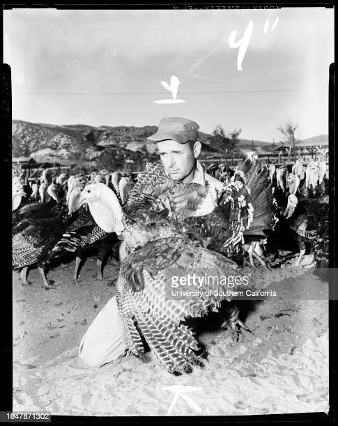 Huntsinger Turkey Ranch in Bouquet Canyon 18 November 1956Supplementary material includes a newspaper clipping from the November 18 1956 edition of...