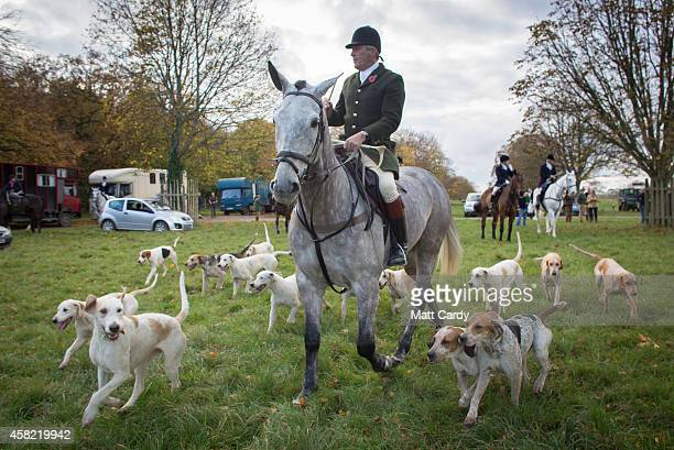 A huntsman from the Duke of Beaufort's Hunt leads the hounds during the opening meet of the season at Badminton House on November 1 2014 near...