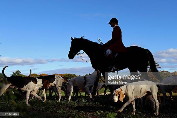 Huntsman Phillip Headdon and his horse George lead a fox hunt at Kitty Crossing Farm on October 25 2015 in Rowley Massachusetts