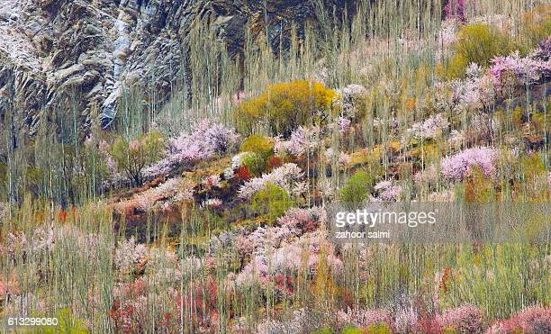 hunza - hunza valley stock pictures, royalty-free photos & images