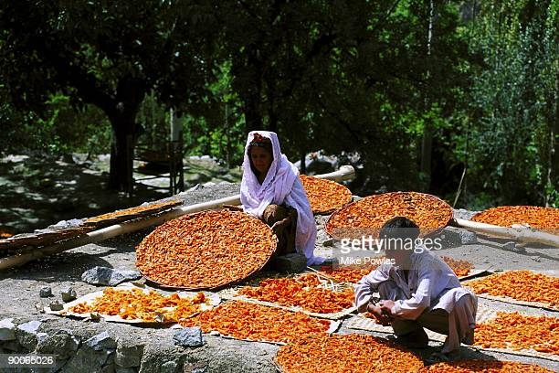 hunza woman with apricot harvest hunza valley, pakistan - hunza valley stock pictures, royalty-free photos & images