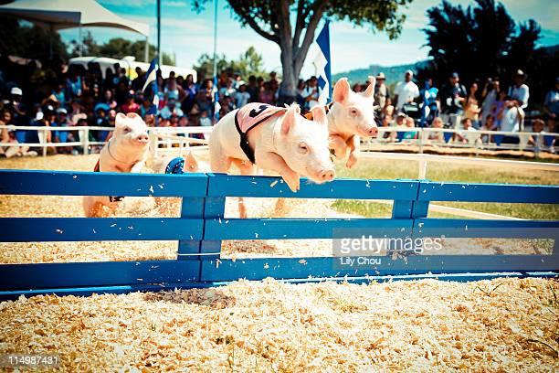 Hurdling pigs