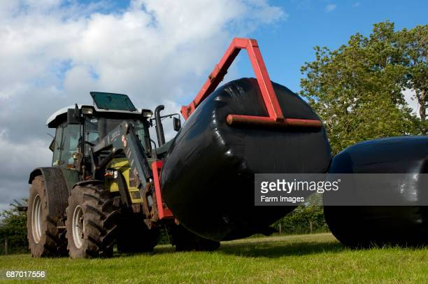Hurlimann Tractor with loader picking up big bales of silage wrapped in black plastic film to stack and store Cumbria