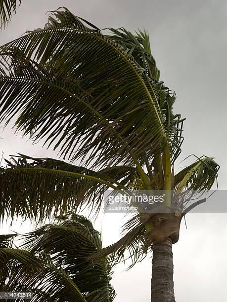huracán enfoques - paisajes de haiti fotografías e imágenes de stock