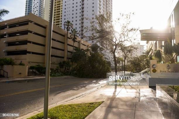 hurricane debris on brickell avenue - miami dade county stock photos and pictures