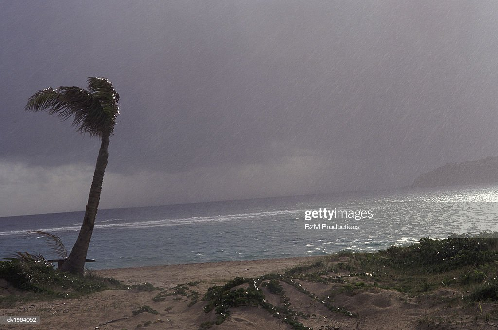 Hurricane on a Beach, Palm Tree Swaying in the Wind and Rain : Stock Photo