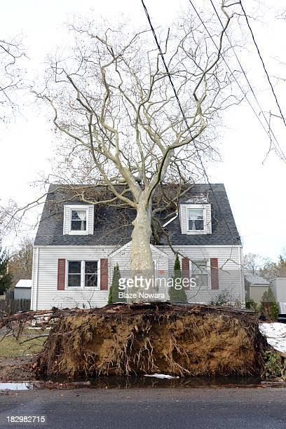 Hurricane Sandy uproots a tree which falls onto a house in Long Branch, New Jersey.