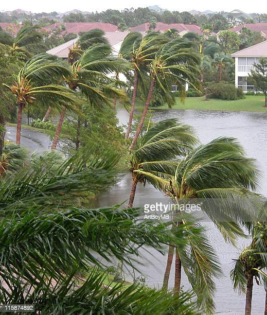 hurricane winds in palms - extreme weather stock photos and pictures