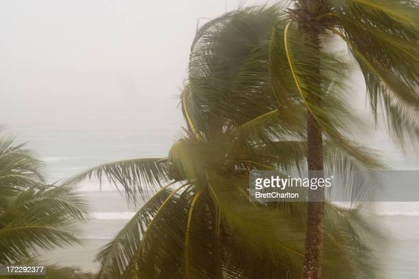 hurricane winds - gale stock photos and pictures