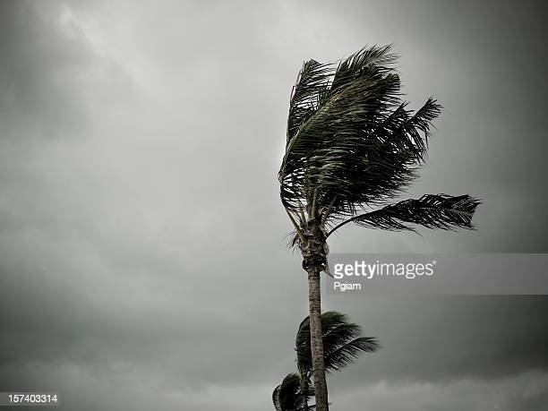 Hurricane winds pound the shore