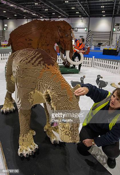 Husband and wife Annie Diment and Ed Diment put the final bricks in place on their Ice Age display with a Lego wolly mammouth made from 400000 bricks...