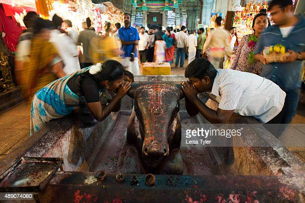 A husband and wife whisper prayers and offerings into the ears of a bull statue at the Meenakshi Amman temple in Madurai Tamil Nadu