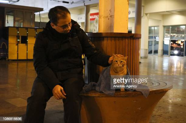 Huseyin Yurtseven a dentist living in Istanbul is seen covering a stray cat with a blanket on January 21 2019 in Istanbul Turkey Yurtseven...