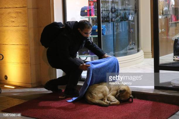 Huseyin Yurtseven a dentist living in Istanbul is seen covering a stray dog with a blanket on January 21 2019 in Istanbul Turkey Yurtseven...