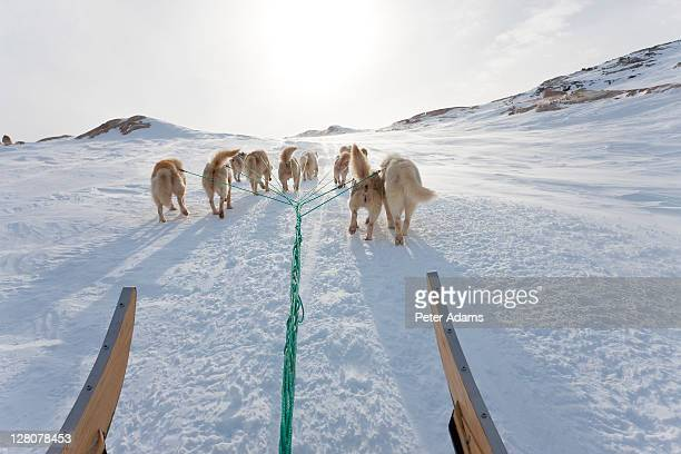 huskies pulling dog sled up a hill, east greenland - 東 ストックフォトと画像