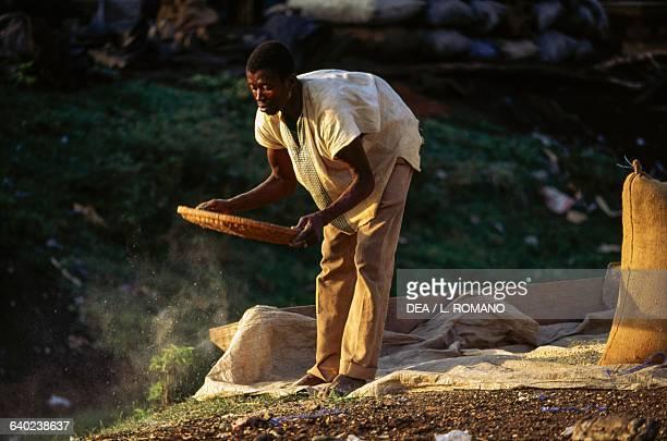 Husking rice region of Man Ivory Coast