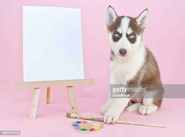 Husky Artist