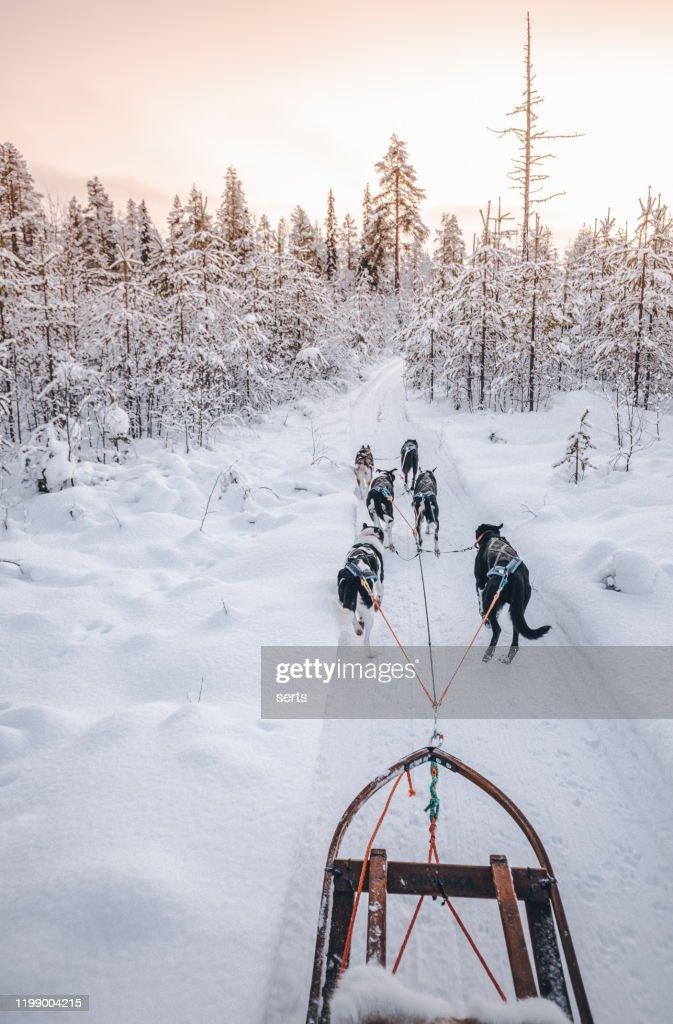 ラプランド、フィンランドのハスキー犬ぞり : ストックフォト
