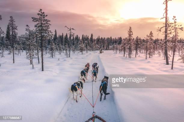 フィンランドのラップランドでハスキー犬ぞり - アラスカ文化 ストックフォトと画像
