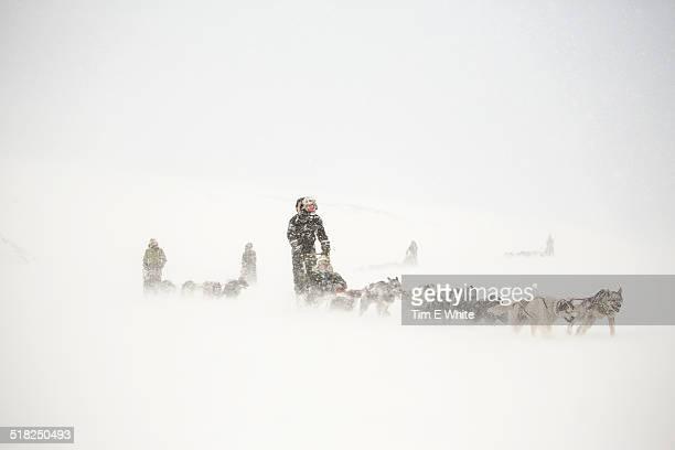 Husky dog sleds,Svalbard, Arctic circle, Norway