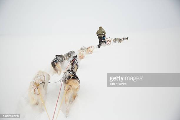 Husky dogs pulling a sled, Svalbard Norway