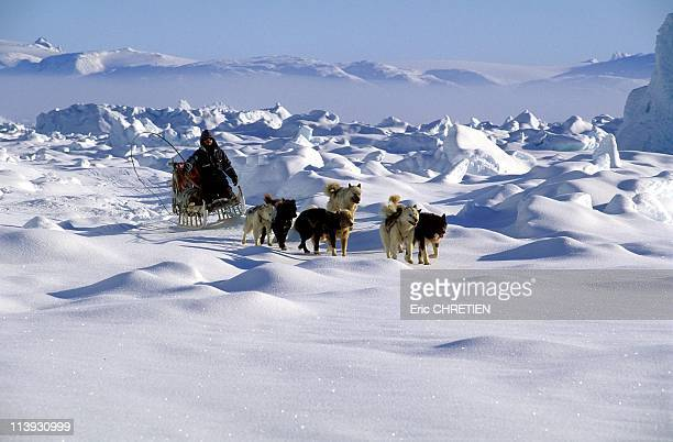 Husky Hitch On The Frozen Fjord Of Sermilik In Greenland In 1997The Greenlandic in the east coast of Greenland always travel with their dogs during...