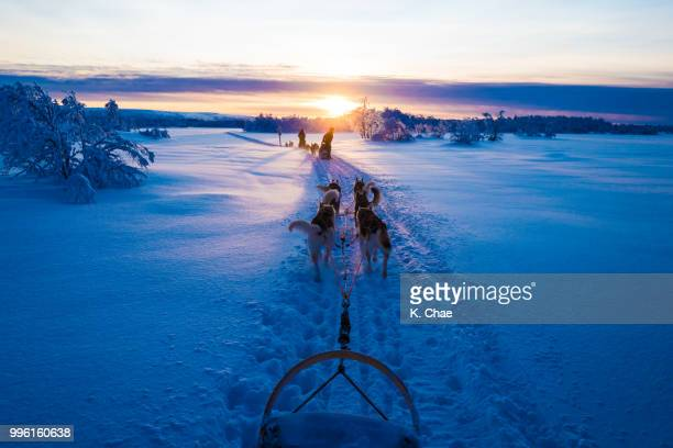 husky ride in winter lapland - dog sledding stock photos and pictures