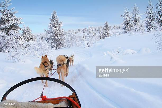 husky ride - finland stock pictures, royalty-free photos & images