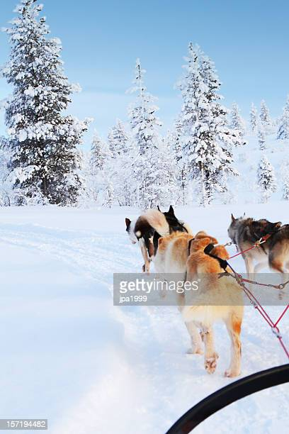 husky ride - swedish lapland stock photos and pictures