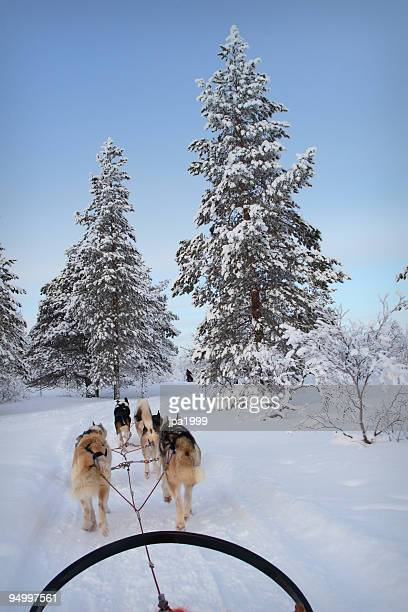 husky ride - dog sledding stock photos and pictures