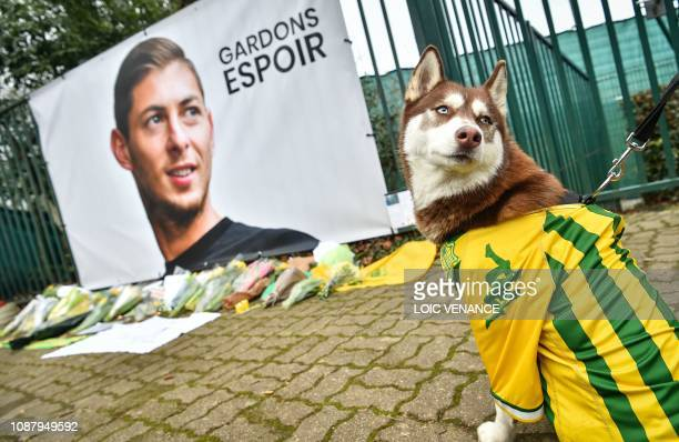 A husky wearing an FC Nantes jersey looks back beside a portrait of Argentinian forward Emiliano Sala prior to a team training session at the team's...